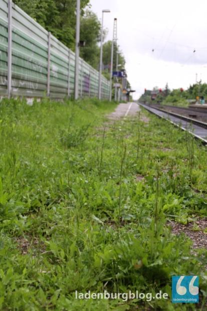 """""""Ich habe mich geschämt"""", sagte Bürgermeister Ziegler zum Bahnhof. Split und Löwenzahn bedecken den Bahnsteig 1. Eine Handhabe, dass die Bahn die Situation verbessert habe weder die Kommune noch der Bund."""