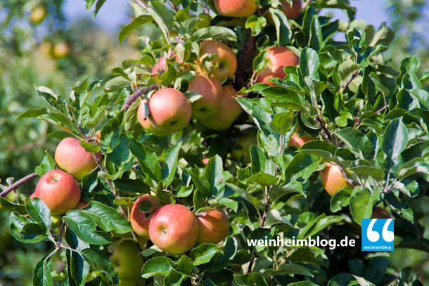 Künftig können die Bergstraßenäpfel beim Bauernhof Rauch abgegeben werden.