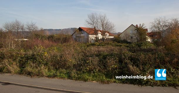 Die Brombeersträucher kommen weg. Auf dem Grundstück baut der Landkreis ein Asylbewerberheim für 200 Personen.